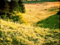 Narcissa hills 2
